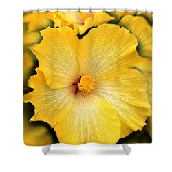 Yellow Fantasy Hibiscus Flowers Shower Curtain by Jennie Marie Schell