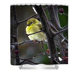 Yellow Finch Shower Curtain by Karen Wiles