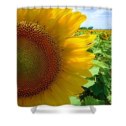 Yellow Glory #2 Shower Curtain by Robert ONeil