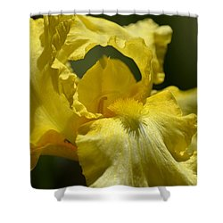 Yellow Iris Swirl Shower Curtain by Maria Urso