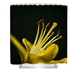 Yellow Lily Shower Curtain by Christina Rollo
