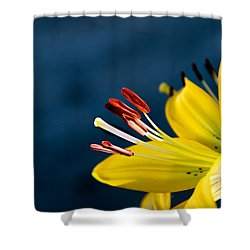 Yellow Lily Stamens Shower Curtain by Robert Bales