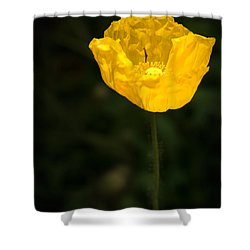 Yellow Poppy Shower Curtain by  Onyonet  Photo Studios