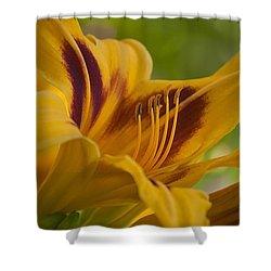 Yellow Rising Shower Curtain by Matthew Blum