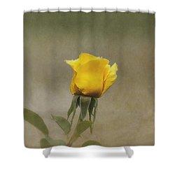 Yellow Rose Shower Curtain by Kim Hojnacki
