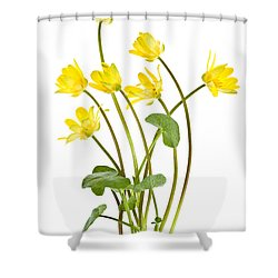 Yellow Spring Wild Flowers Marsh Marigolds Shower Curtain by Elena Elisseeva