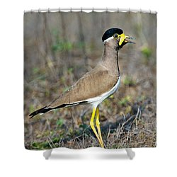 Yellow-wattled Lapwing Vanellus Shower Curtain by Panoramic Images