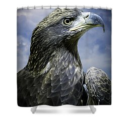 Young Bald Eagle Shower Curtain by F Leblanc