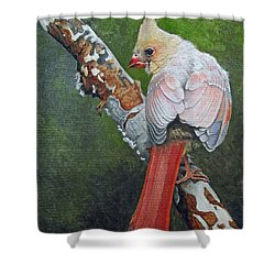 Young Cardinal  Shower Curtain by Ken Everett