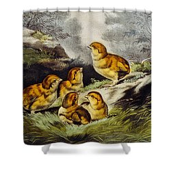 Young Chicks Circa 1856 Shower Curtain by Aged Pixel