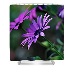 Young Daisies Shower Curtain by Kaye Menner