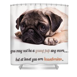 Young Pup Shower Curtain by Edward Fielding