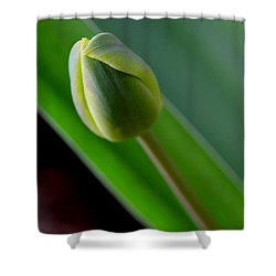 Young Tulip Shower Curtain by Lisa Phillips