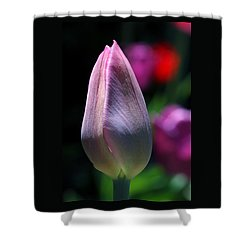 Youth And Beauty Shower Curtain by Rona Black