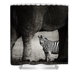 Zebra Barking Shower Curtain by Johan Swanepoel