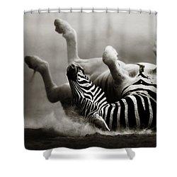 Zebra Rolling Shower Curtain by Johan Swanepoel