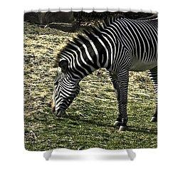 Zebra Striped Fourlegger Shower Curtain by LeeAnn McLaneGoetz McLaneGoetzStudioLLCcom