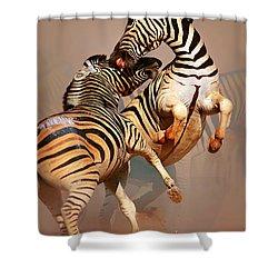 Zebras Fighting Shower Curtain by Johan Swanepoel