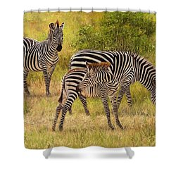Zebras South Luangwa Shower Curtain by David Stribbling