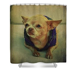 Zozo Shower Curtain by Laurie Search