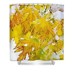 Autumn Snow Portrait Shower Curtain by James BO  Insogna