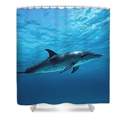 Atlantic Spotted Dolphin Stenella Shower Curtain by Todd Pusser