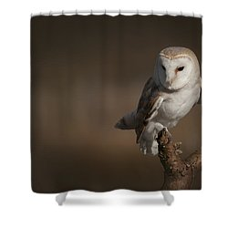 Barn Owl Shower Curtain by Andy Astbury