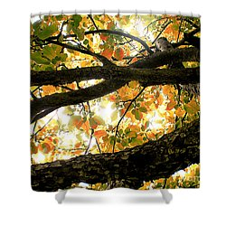 Beneath The Autumn Wolf River Apple Tree Shower Curtain by Angie Rea