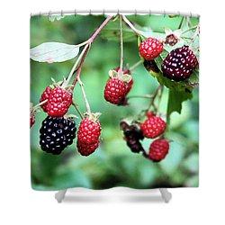 Blackberries Shower Curtain by Kristin Elmquist