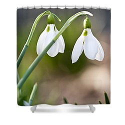 Blooming Snowdrops Shower Curtain by Elena Elisseeva