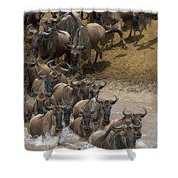 Blue Wildebeest Connochaetes Taurinus Shower Curtain by Suzi Eszterhas