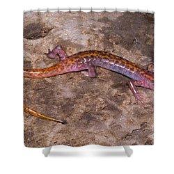 Cave Salamander Shower Curtain by Dante Fenolio