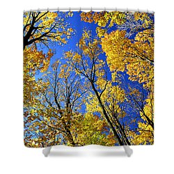 Fall Maple Trees Shower Curtain by Elena Elisseeva