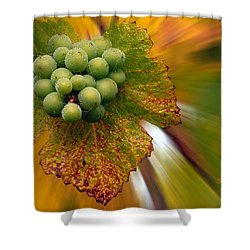 Grapes Shower Curtain by Jean Noren