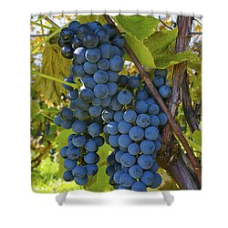 Grapes On A Vine Sutton Junction Quebec Shower Curtain by David Chapman
