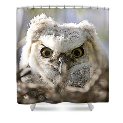 Great Horned Owl Babies Owlets In Nest Shower Curtain by Mark Duffy
