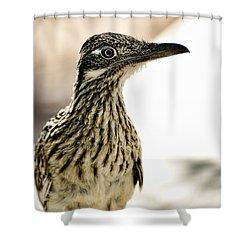 Greater Roadrunner  Shower Curtain by Saija  Lehtonen