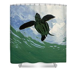 Leatherback Sea Turtle Dermochelys Shower Curtain by Mike Parry