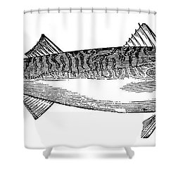 Mackerel Shower Curtain by Granger