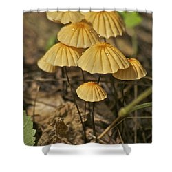 Mushrooms Shower Curtain by Michael Peychich