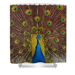 Peacock Shower Curtain by Carlos Caetano