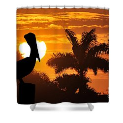 Pelican At Sunset Shower Curtain by Dan Friend