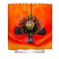 Poppy Heart Shower Curtain by Karon Melillo DeVega