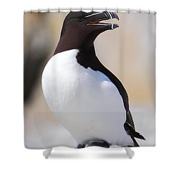 Razorbill Shower Curtain by Bruce J Robinson
