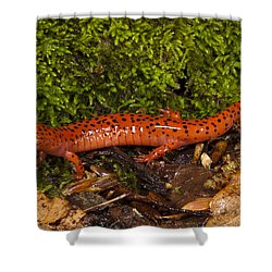 Red Salamander Pseudotriton Ruber Shower Curtain by Pete Oxford