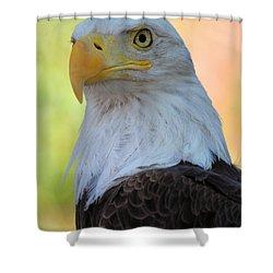 Regal Eagle Shower Curtain by Linda Eshom