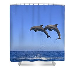 Roatan, Bay Islands, Honduras Shower Curtain by Stuart Westmorland
