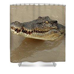 Salt Water Crocodile 3 Shower Curtain by Bob Christopher