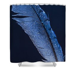 Wet Jay Shower Curtain by Jean Noren