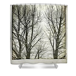 Winter Trees Shower Curtain by Silvia Ganora